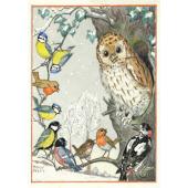 Postal card An owl and other birds (Molly Brett)