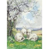 Postcard  Two new born lambs in the field (Molly Brett)