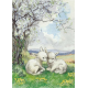 Postcard  Two new born lambs in the field (Molly Brett)