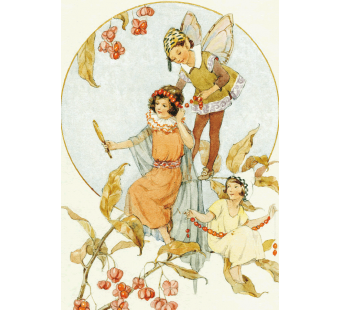 Postal card  Spindle Berries (W Tarrant)