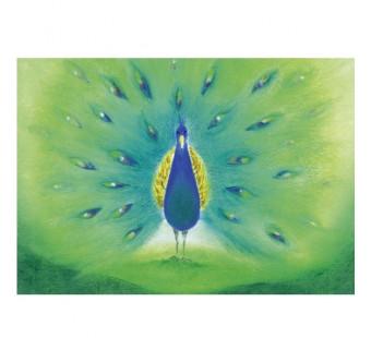 peacock (Baukje Exler)